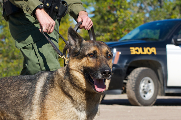 canine drug searches,canine drug searches lawyer,canine drug searches attorney,canine drug searches Arizona