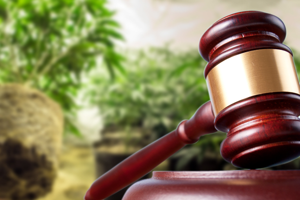Federal Drug Cultivation Charges, marijuana cultivation, cultivating marijuana, marijuana cultivation laws, cultivation of marijuana charge, cannabis cultivation, cultivating cannabis, cultivation of cannabis, charges for cultivation of cannabis